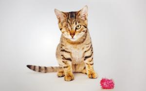 Dierenbescherming start zomeractie voor kittens