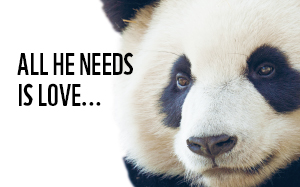 All you need is WNF (en meer panda's)